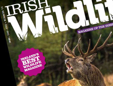 IWT Wildlife Magazine
