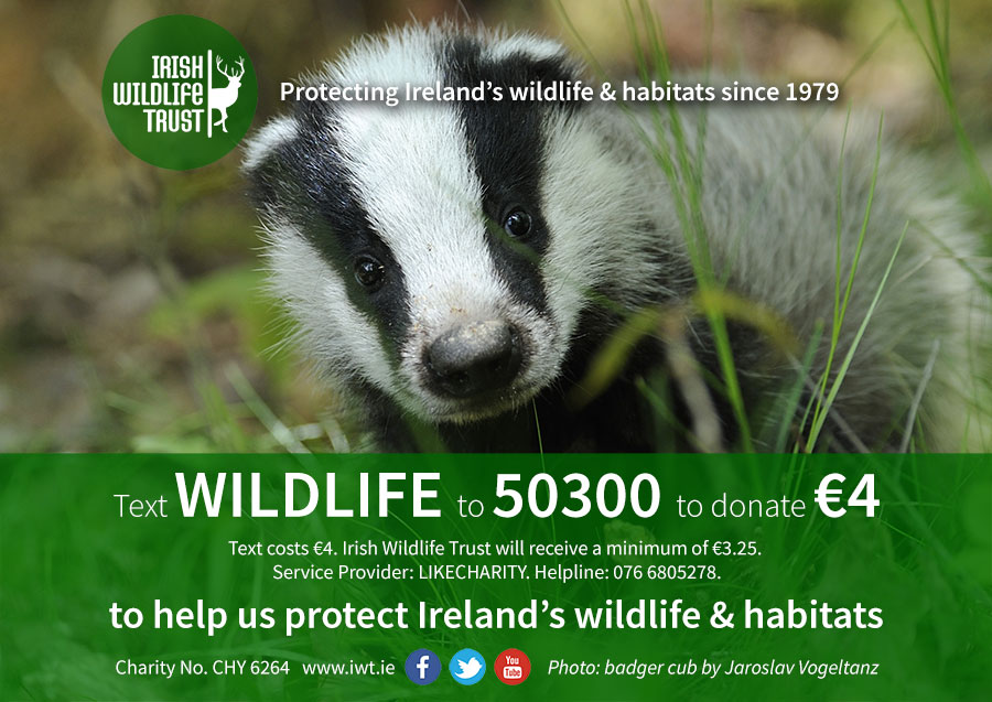 Text WILDLIFE to 50300 to donate €4 to IWT.