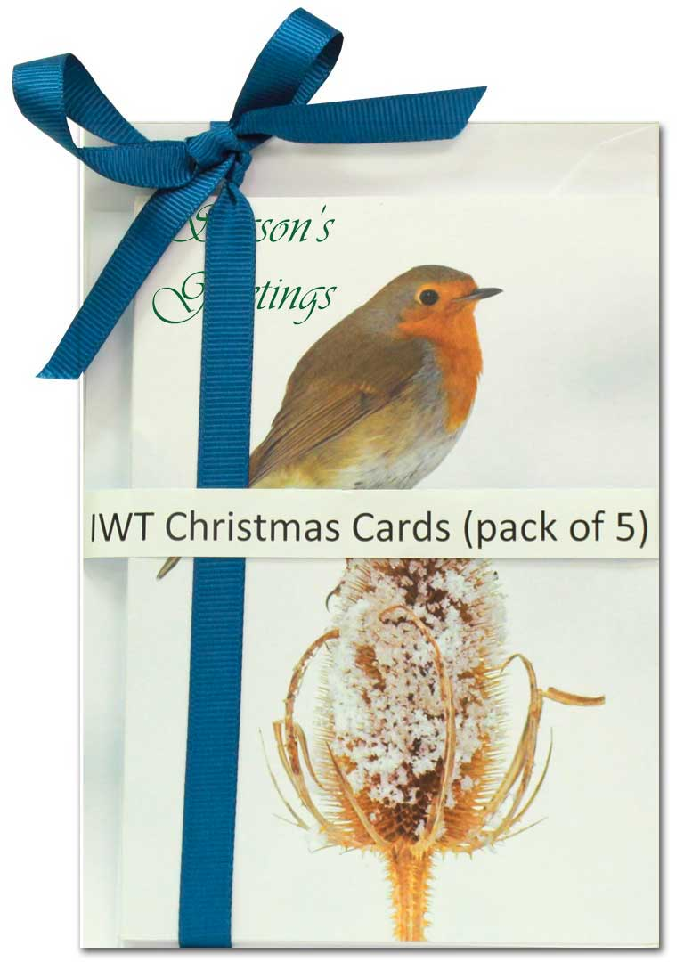 IWT Christmas Cards - Robin - pack of 5