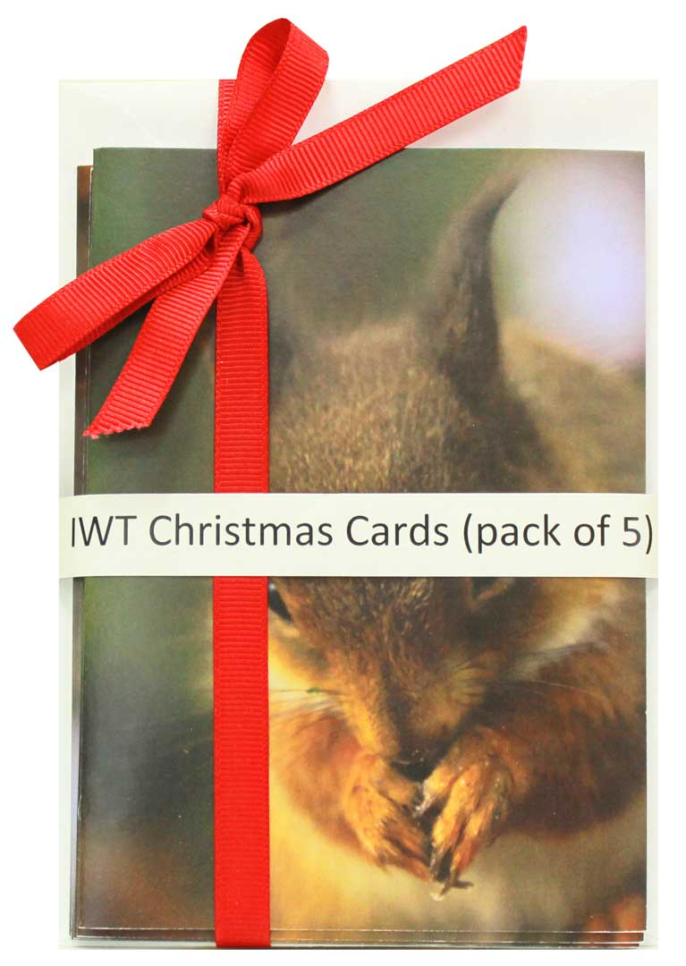 IWT Christmas Cards – Squirrel