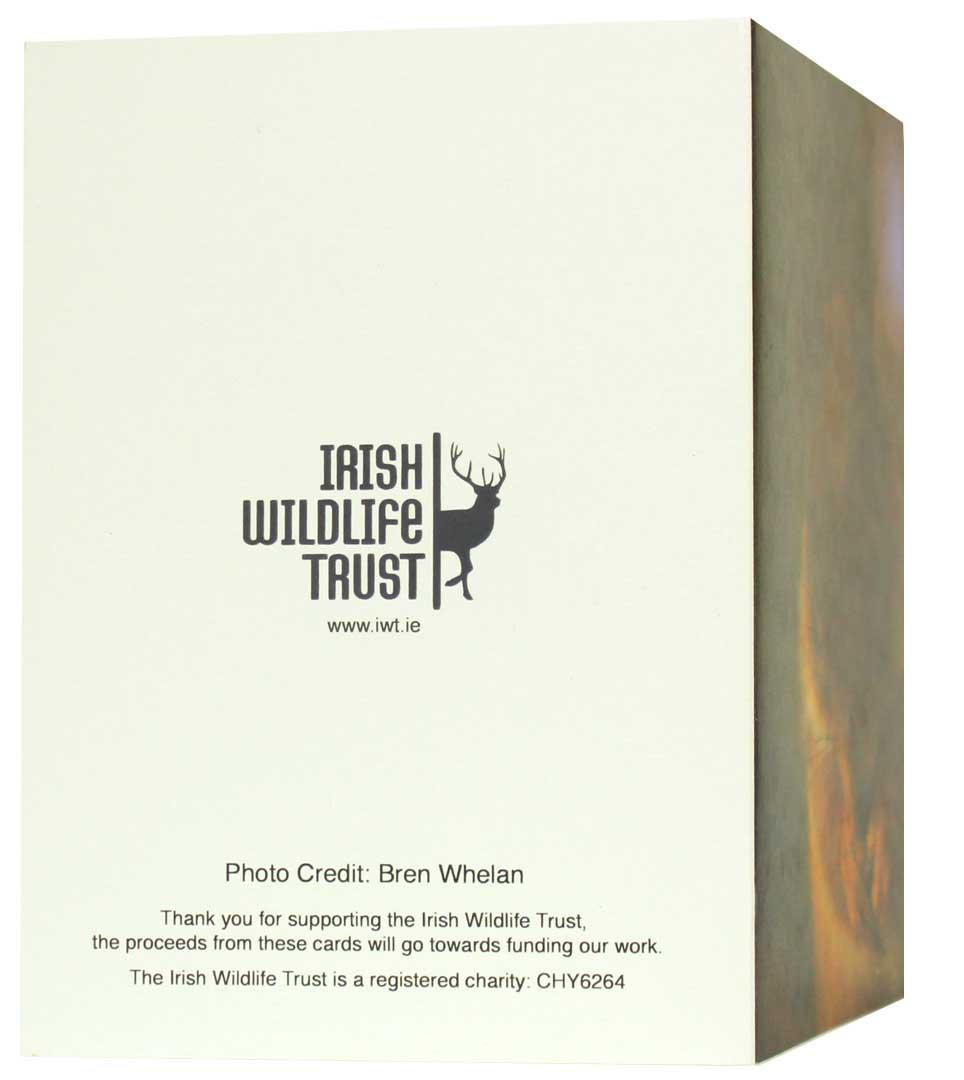 IWT Christmas Cards - Squirrel - Irish Wildlife Trust