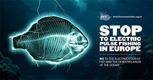 Link to Petition to stop electric pulse fishing