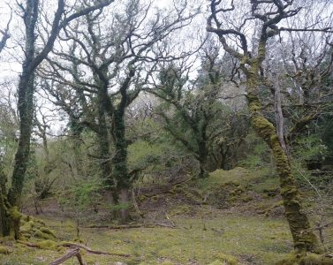 FULLY BOOKED ** Free guided walk at Derryclare Woods - Co