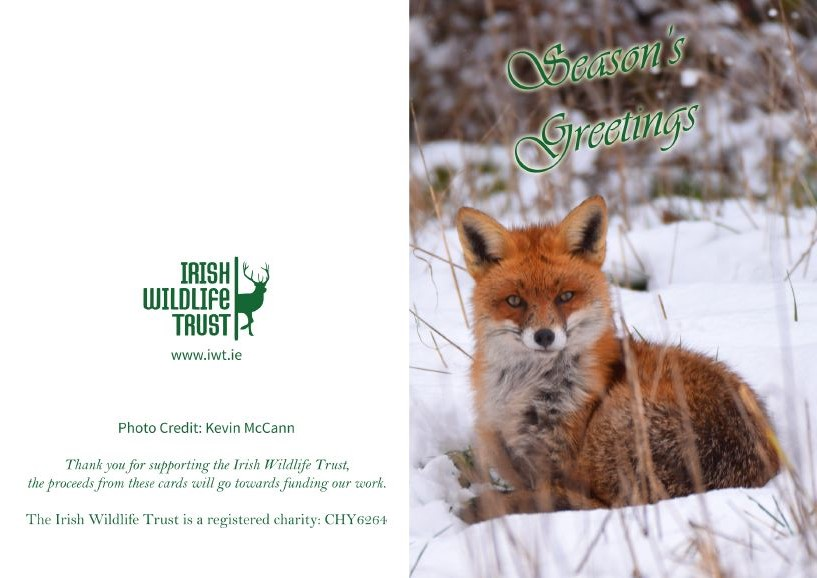 Wildlife Christmas Cards.Iwt Christmas Cards Fox