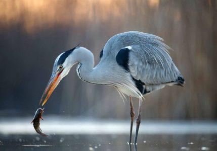 River Liffey Nature Walk - Dublin