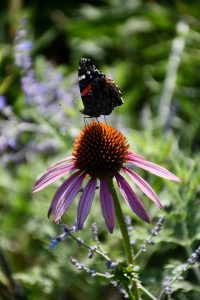 NBW: Biodiversity in the Garden (Family friendly event)