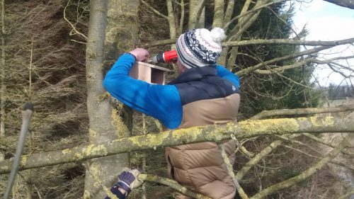 NBW: Conservation Volunteers; Kilminchy Wildlife Enhancement