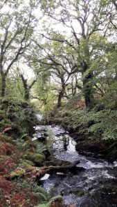 Free guided walk at Derryclare Wood (2 places left)