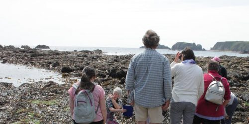 NBW: Waterford Rocky Shore Ecology - Fully Booked!