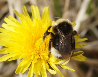 IWT Bee Monitoring and Habitat Creation Workshop - Donegal