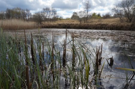 What does the future hold for our bogs? POSTPONED