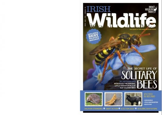 https://iwt.ie/wp-content/uploads/2020/05/iwt-mag-cover-spring-2020_booklet-566x400.jpg