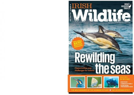 https://iwt.ie/wp-content/uploads/2020/07/iwt-mag-cover-summer-2020_booklet-566x400.jpg