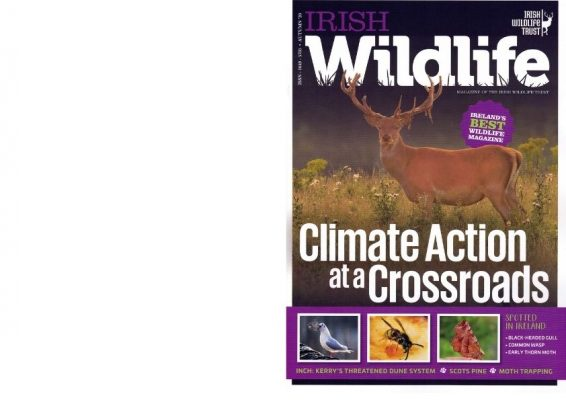 https://iwt.ie/wp-content/uploads/2020/10/iwt-mag-cover-autumn-2020_booklet-566x400.jpg