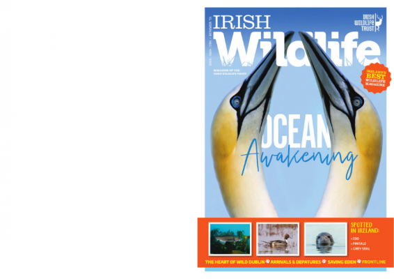 https://iwt.ie/wp-content/uploads/2021/06/Booklet-summer-21-566x400.png